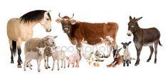 Imágenes y fotos de animales - Fotos, ilustraciones, arte vectorial, vídeo | Depositphotos®