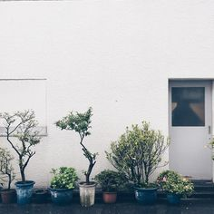 tokyo plant love