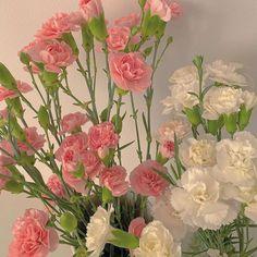 Nature Aesthetic, Flower Aesthetic, My Flower, Beautiful Flowers, Sogetsu Ikebana, No Rain, Pretty Pictures, Aesthetic Pictures, Planting Flowers