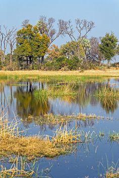 Chitabe Camp, Okavango Delta, Botswana