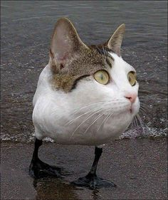 """Art-Sci: Wicked Photoshopped Animal Hybrids -- I feel like this is more of a """"hmm"""" than a """"ha""""."""