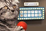 Gjett prisen. Cats, Animals, Gatos, Animales, Animaux, Animal, Cat, Animais, Kitty