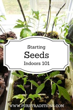 Start Garden Seeds Indoors 13 surprising shortcuts to starting seeds indoors gardens garden 13 surprising shortcuts to starting seeds indoors gardens garden ideas and plants workwithnaturefo