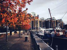 Autumn in St Katherine's Docks. London, UK