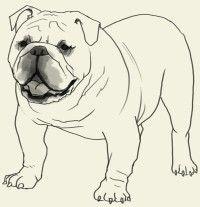 How to draw Bulldog