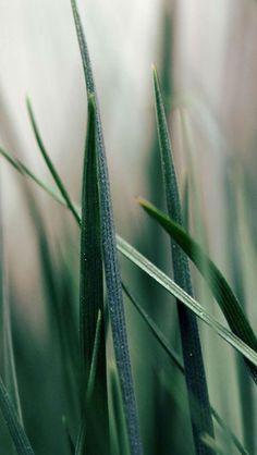 Green grass #iPhone #5s #Wallpaper