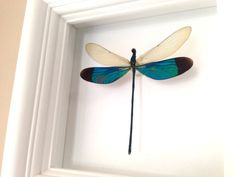 Real Framed Dragonfly Shadowbox  Dragonfly by AsanaNaturalArts