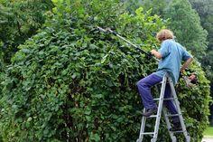 Heckeschneiden: So tun Sie Ihrem Garten etwas richtig Gutes!