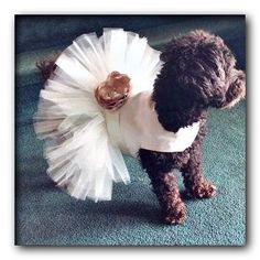 broad city dog wedding episode Dog Wedding Attire, Dog Wedding Dress, Wedding Dresses, Girl Dog Clothes, Puppy Clothes, Disney Dresses, Dog Dresses, Animals Doing Funny Things, Dog Tuxedo