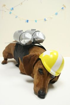 ammo the dachshund rocket dog Dachshund Costume, Mini Dachshund, Dog Rules, Dog Costumes, Dog Life, Dog Pictures, Beautiful Creatures, Wiener Dogs, Fur Babies