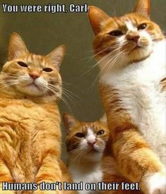 Funny Scary Gangster Cats