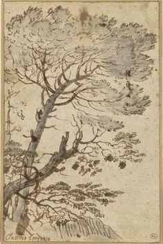 Etude de Pin / Claude Gellée dit Le Lorrain ; XVIIe siècle. http://www.photo.rmn.fr/C.aspx?VP3=SearchResult