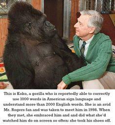 Koko and Mr. Rogers. So precious.