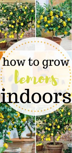 Beau Indoor Gardening Tips For Beginners. Learn 6 Indoor Gardening Mistakes.  #garden #Herbs #Gardening #frugal #tips #ideas #Beginner | TOP Pins From  Top ...