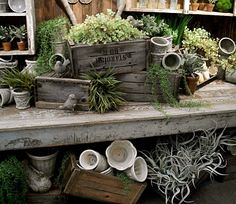 I love this collection. Nice display for potting bench on garden tour