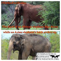 #EleFunFactFriday  African vs Asian