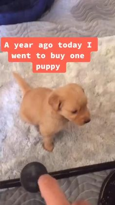 Baby Animals Pictures, Cute Animal Photos, Cute Animal Videos, Funny Animal Pictures, Dog Pictures, Cute Puppy Videos, Cute Baby Dogs, Cute Funny Dogs, Cute Funny Animals