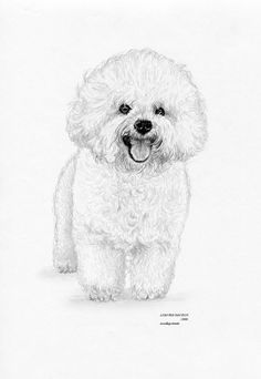 BICHON FRISE dog Limited Edition art drawing print signed by
