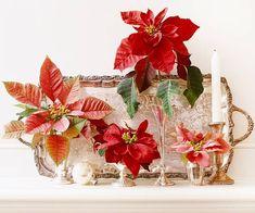 Arreglos navideos con flor de pascua