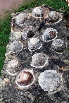 Fossilized Dinosaur eggs displayed at Indroda Dinosaur and Fossil Park, in Gandhinagar in the state of Gujarat, India.