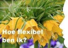Mijn inspiratie: Hoe flexibel ben ik?