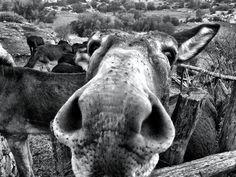 Happy country donkey
