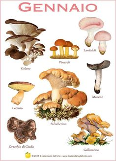 Most people who go in for mushroom growing just go out and buy both the spores (or spawn) and the growth medium. But if you are thinking of growing mushrooms commercially Growing Mushrooms, Wild Mushrooms, Stuffed Mushrooms, Mushroom Art, Mushroom Fungi, Edible Mushrooms, Botanical Drawings, Gardening Supplies, Flowers Nature