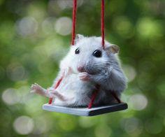 Swingset is fun!