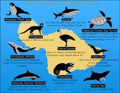 Top 10 Animals to See on Maui! http://www.prideofmaui.com/blog/maui/top-animals-maui.html