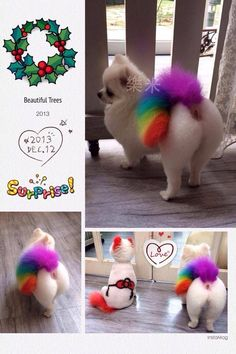 -repinned- More creative dog grooming
