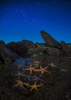 Starfish under the stars out on the Washington Coast by Ben Canales