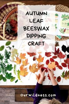 Follow these easy instructions for a natural fall craft. Beeswax leaf dipping is a simple, seasonal project that is fun for all ages! We love doing this in the autumn months, when the leaves are changing colours. Autumn Nature, Autumn Leaves, Crafts For Seniors, Crafts For Kids, Projects For Kids, Craft Projects, Autumn Activities For Kids, Baby Activities, Easy Fall Crafts
