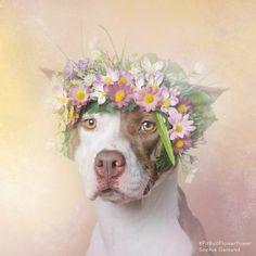 flower-crown-dog                                                                                                                                                                                 Mais