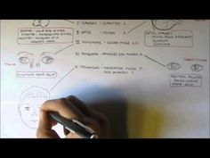 Cranial Nerves - Functions and Disorders - YouTube