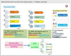 Τα μόρια της ζωής (The Molecules Of Life) Dna, Technology, Education, Blog, Tech, Tecnologia, Blogging, Onderwijs, Learning