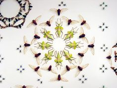 pigeon gillian: Jennifer Angus....Insect Artist!  She uses dried insects to make intricate patterns on walls and often creates full room installations.