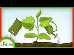 Science Movies, New Books, Plant Leaves, Engineering, World, Ecology, Cities, Plants, Gardens