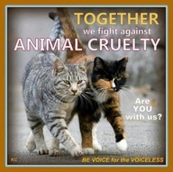 AGREE! Please REPIN to appropriate boards! #cat  #animal