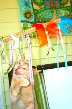 Easy pet toy:  Use a staple gun to attach ribbon to a wooden ruler