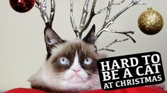 Grumpy Cat, Colonel Meow, Oskar the Blind Cat, Nala Cat, and Hamilton the Hipster Cat have come together in an unprecedented celebrity cat supergroup this ho...