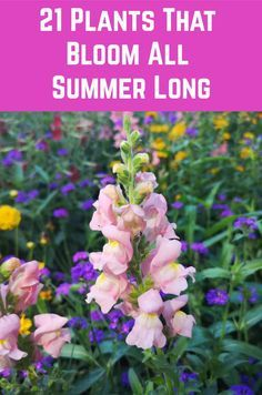 21 Plants That Bloom All Summer Long - - Here is a wide selection of beautiful summer plants which bloom profusely throughout the season without much pampering from you. Outdoor Flowers, Outdoor Plants, Garden Plants, Outdoor Gardens, House Plants, Landscaping Plants, Summer Plants, Summer Flowers, Long Flowers