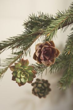 Go Green With Succulent Ornaments --> http://www.hgtvgardens.com/christmas/nature-inspired-holiday-decor?s=1&soc=pinterest