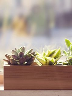 """Fifth anniversary gift: wooden planter: """"Show them how much your love has """"grown"""" over the last 5 years."""""""