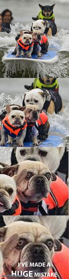 Dog Has Made A Huge Mistake Endless Picdump
