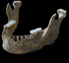 Uno de los primeros europeos era tataranieto de neandertales | Ciencia | EL PAÍS