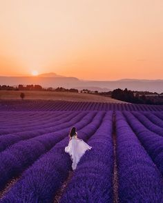 Travel, Cafe Racers and Fashion. Lavender Fields, Lavender Flowers, Beautiful Flowers, Beautiful Places, Belle France, Lavender Aesthetic, Juan Les Pins, Valensole, Model Foto