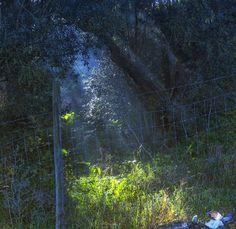 Spotlight on Litter by jaydee73 on tookapic