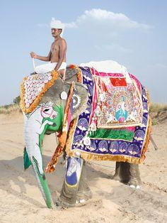 charles freger - elephants in jaipur