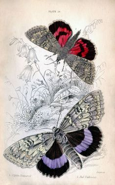 real butterfly patterns - Google Search