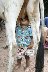 This 2 years old boy lives with his grandfather. They where to poor to eat. Then the little boy learned himself to drink by a cow, cause he had seen a little cow doing that. INSTINCT saved his live. How wonderfull!